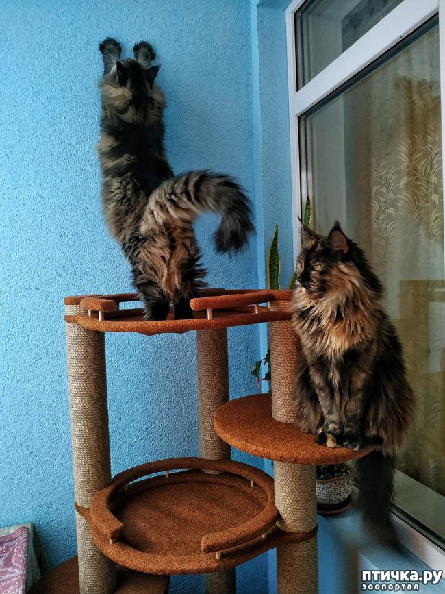 фото 7: Какие же они длинные!!!