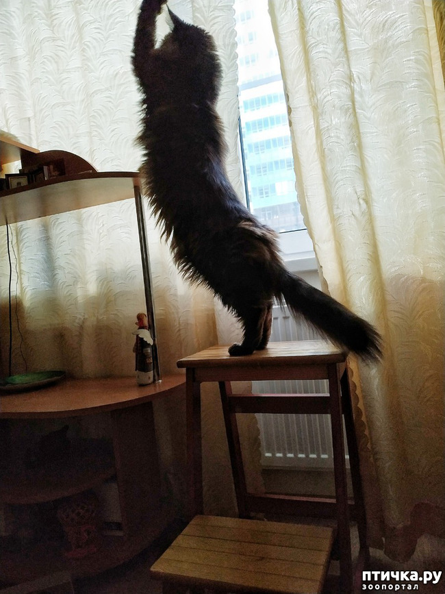 фото 11: Какие же они длинные!!!