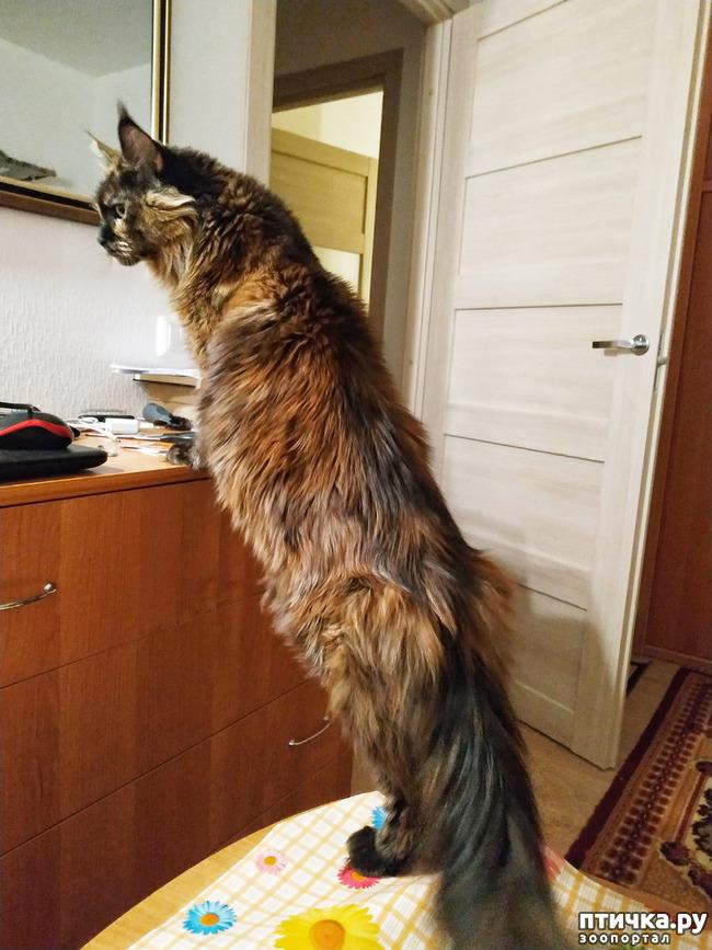 фото 13: Какие же они длинные!!!