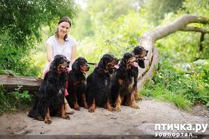фото: Питомник собак Гордон Хаус. Россия Санкт-Петербург.