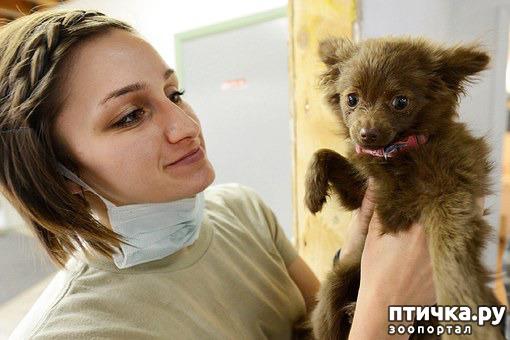 фото 1: Эпилепсия у собак