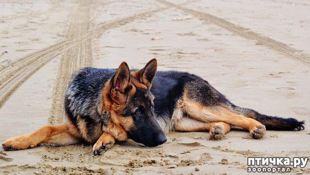 фото 3: Эпилепсия у собак