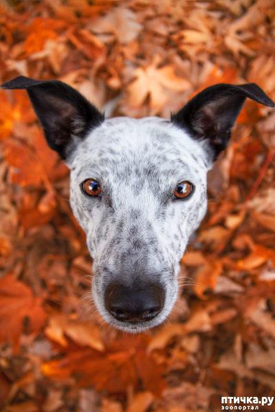 фото 3: Международный конкурс на лучшую фотографию собаки. Номинация