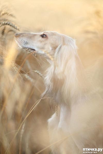 фото 1: Международный конкурс на лучшую фотографию собаки. Номинация