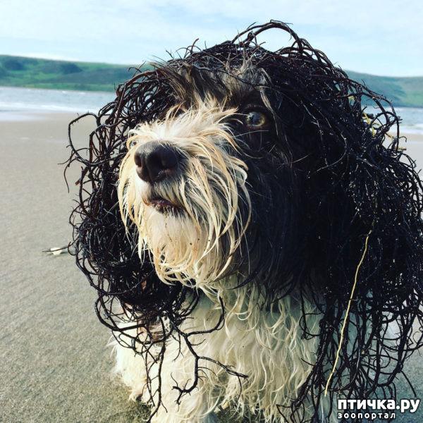 фото 4: Международный конкурс на лучшую фотографию собаки. Номинация