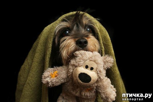 """фото 1: Международный конкурс на лучшую фотографию собаки. Номинация """"Я люблю собак, потому что…"""","""