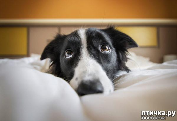 """фото 2: Международный конкурс на лучшую фотографию собаки. Номинация """"Я люблю собак, потому что…"""","""
