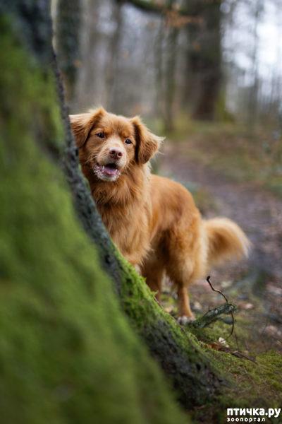 """фото 3: Международный конкурс на лучшую фотографию собаки. Номинация """"Я люблю собак, потому что…"""","""