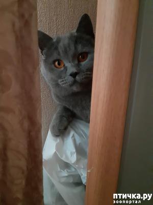 фото: Таинственное исчезновение котов в замкнутом пространстве