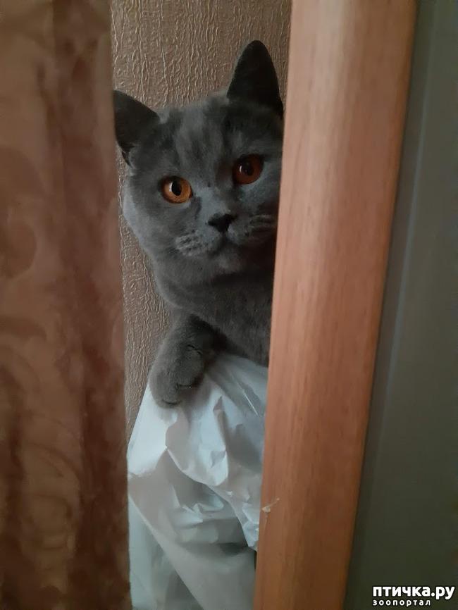фото 1: Таинственное исчезновение котов в замкнутом пространстве