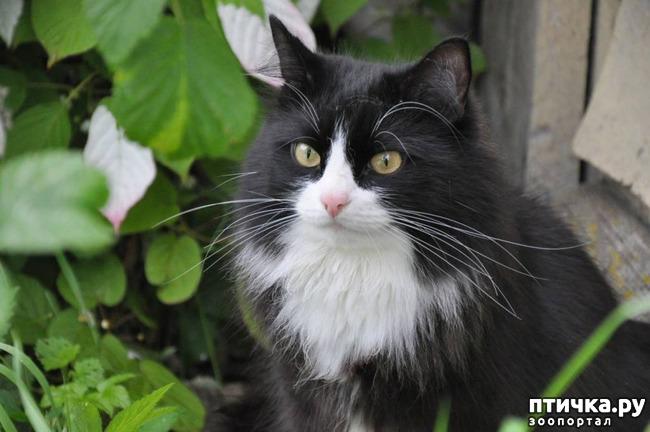 фото 1: Как кот заставил своего хозяина бросить пить. Реальная история от Юрия Куклачева)