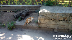 фото: Кошачьи новости