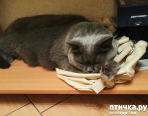фото: Где спит Хани.