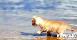фото: Классификация котов и кошек по их любви к воде))