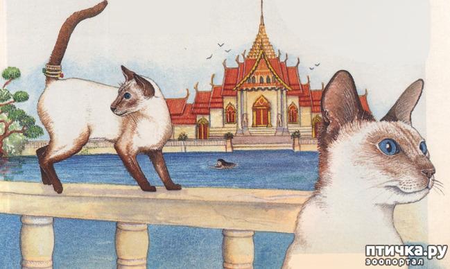 фото 3: Загибы на кончиках хвостов у сиамских кошек