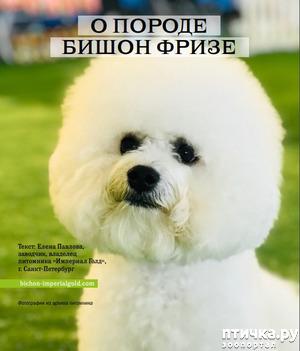 фото: Питомник Империал Голд. Статья в журнале Foodstuff/zoo № 1-2 (49)2019
