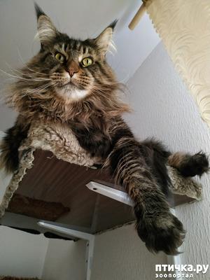 фото: Кошки и полки