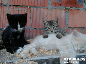 фото: Кошка притащила трех котят