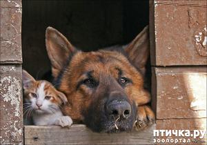 фото: Кот и пёс