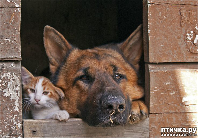 фото 1: Кот и пёс
