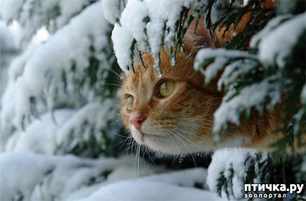 фото 1: С первым днем зимы!