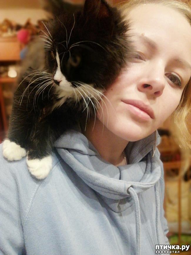 фото 3: На домашней передержке. Подвальный котенок