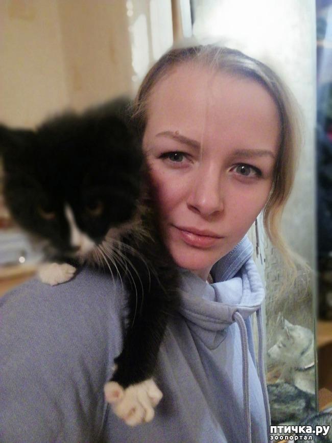 фото 2: На домашней передержке. Подвальный котенок