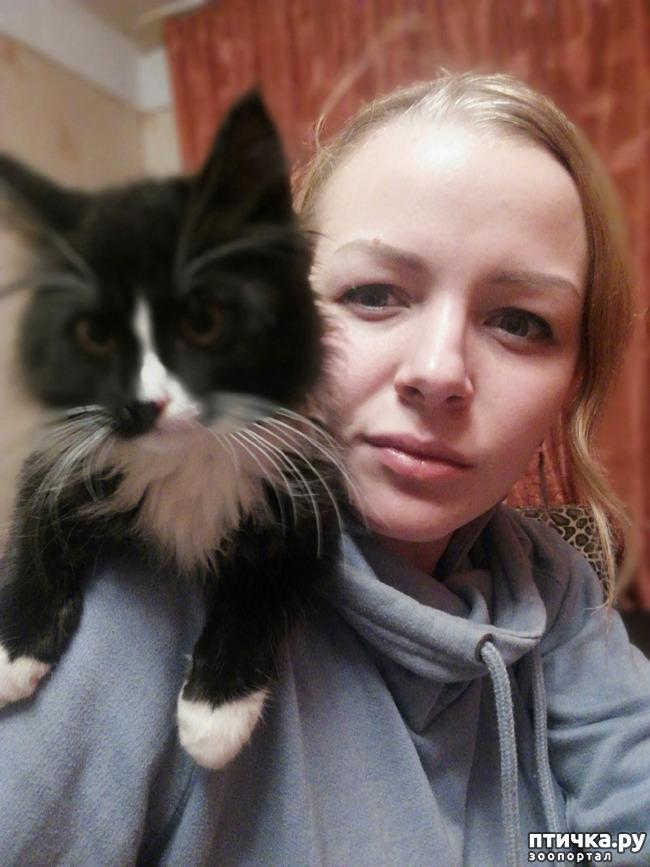 фото 5: На домашней передержке. Подвальный котенок