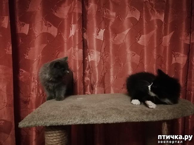 фото 8: На домашней передержке. Подвальный котенок
