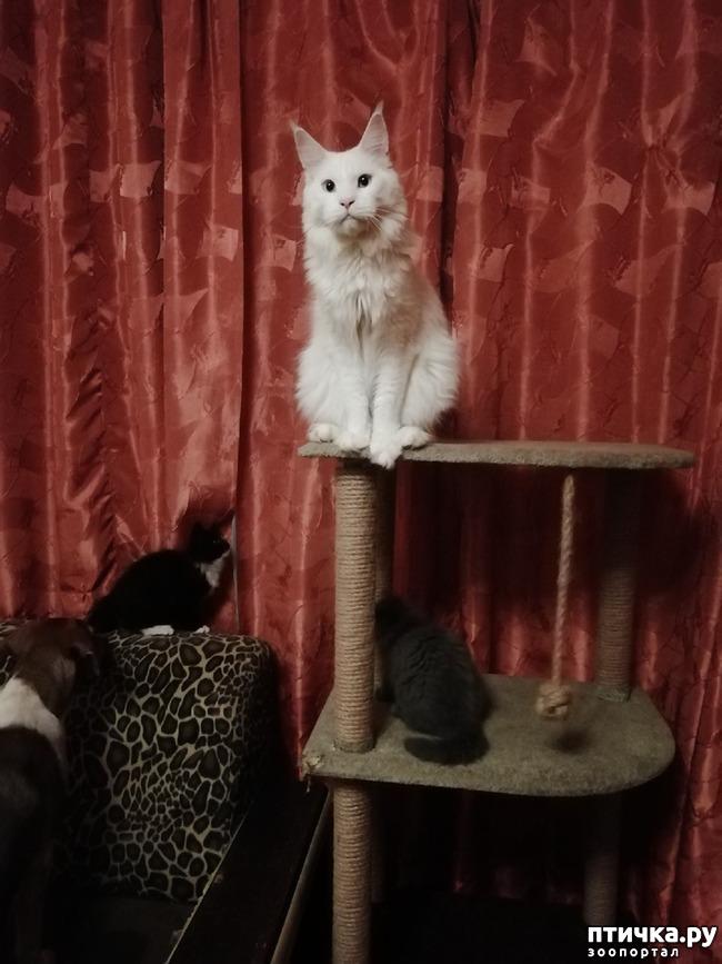 фото 11: На домашней передержке. Подвальный котенок
