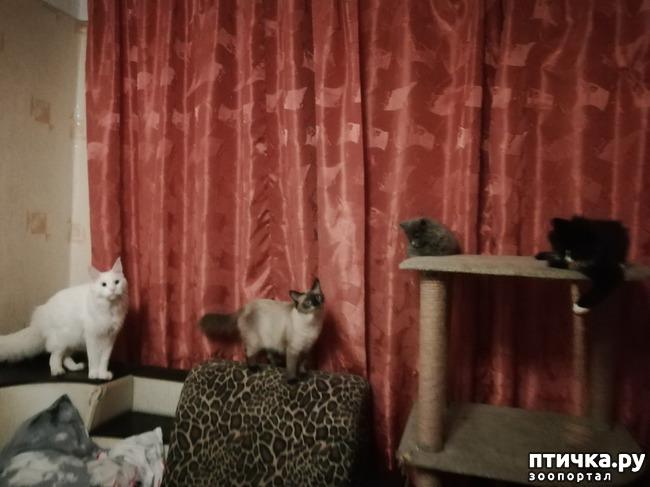 фото 10: На домашней передержке. Подвальный котенок