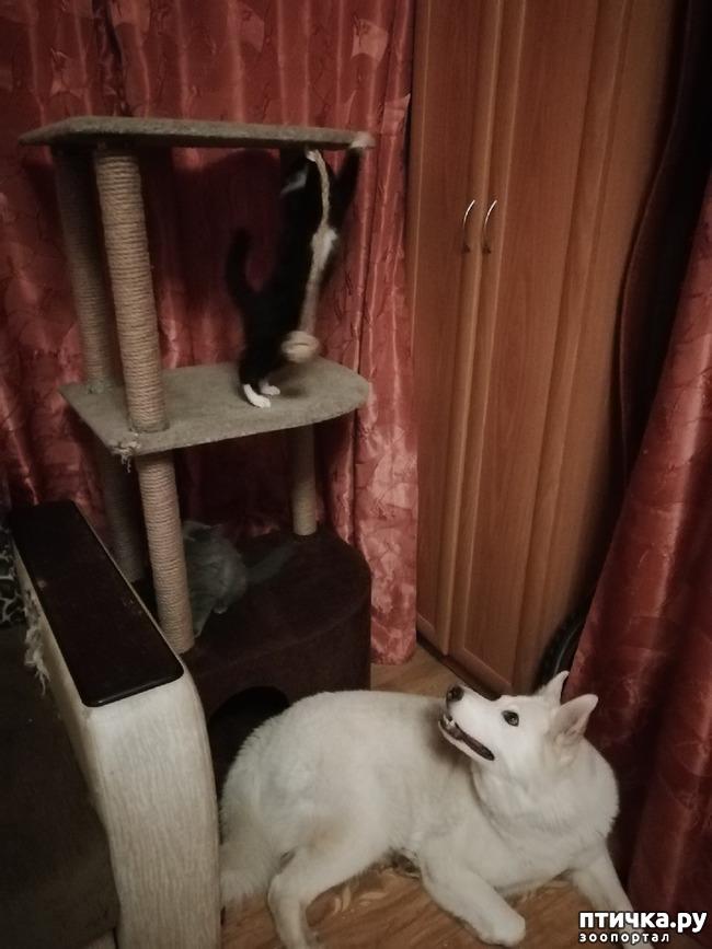 фото 12: На домашней передержке. Подвальный котенок