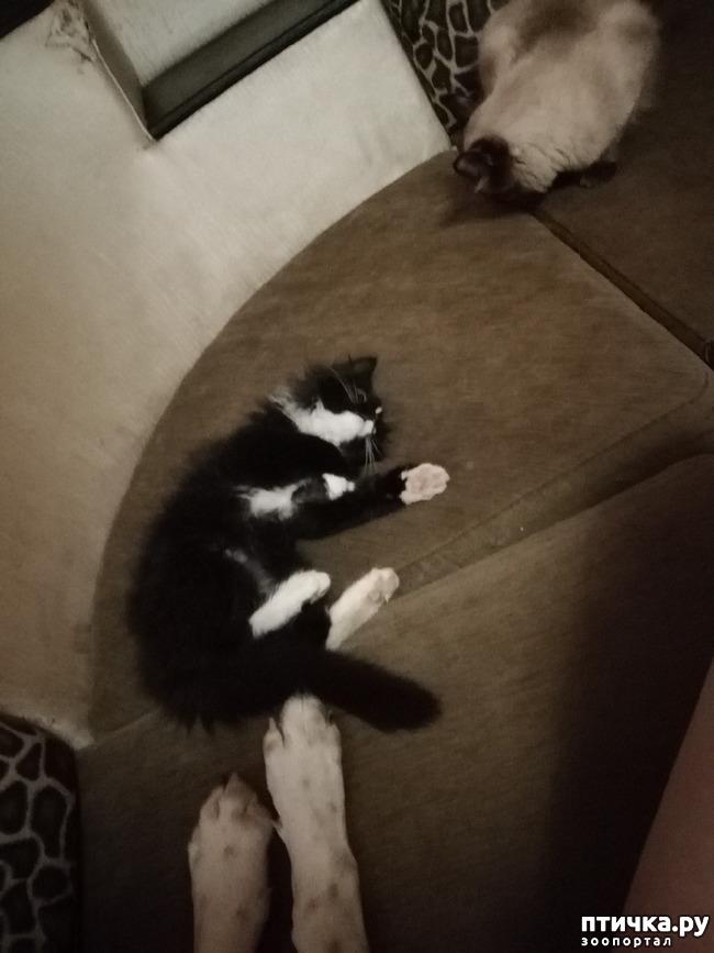фото 14: На домашней передержке. Подвальный котенок