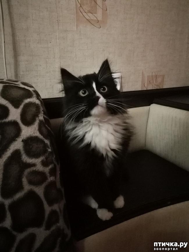 фото 16: На домашней передержке. Подвальный котенок