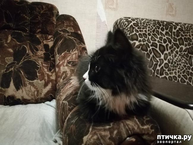 фото 17: На домашней передержке. Подвальный котенок