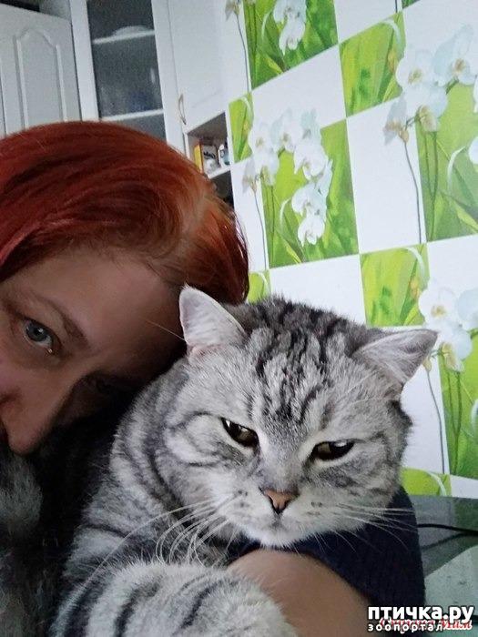 фото 6: Как дать горькое лекарство кошке???