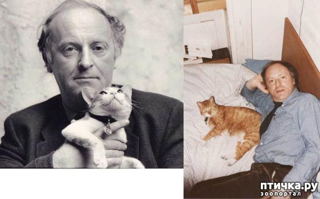 фото 1: Знаменитости и кошки