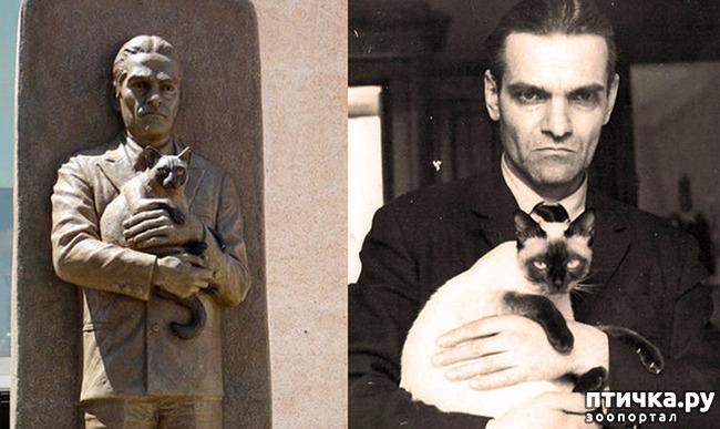 фото 5: Знаменитости и кошки