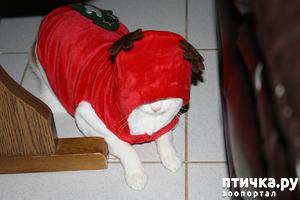 фото: Как Пинат был оленем на Рождественский вечер