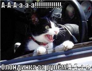 фото: Посмеёмся, на сон грядущий?! Фотосессия кошек ( фотографии из интернета).