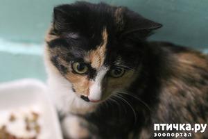 фото: Маргис. Кошка с мужским именем