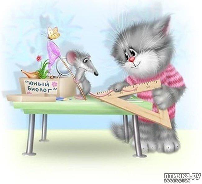 фото 2: Художник Алексей Долотов. Жил забавный рыжий кот…