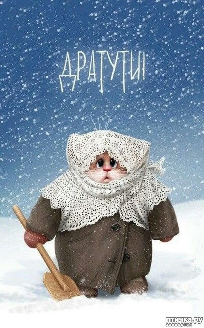 фото 7: Художник Алексей Долотов. Жил забавный рыжий кот…