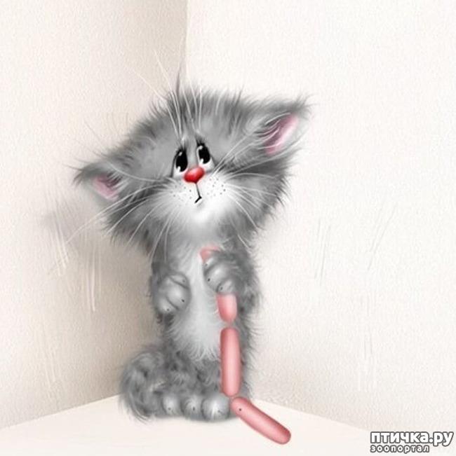 фото 19: Художник Алексей Долотов. Жил забавный рыжий кот…