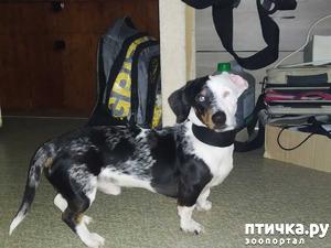 фото: Оздоровительное воздействие собак.