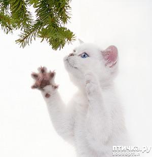 фото: Крадется зима, наступая...