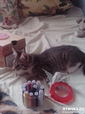 фото: Кузьма: деревенский кот.