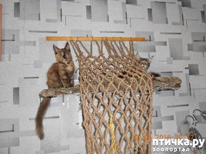 фото: Всюду кошки, кошки, кошки! Всюду кошки, господа!