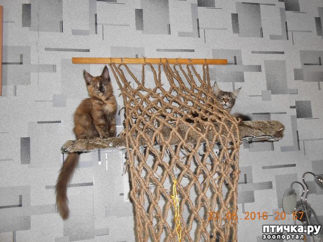 фото 1: Всюду кошки, кошки, кошки! Всюду кошки, господа!