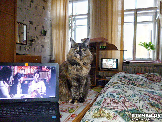 фото 3: Всюду кошки, кошки, кошки! Всюду кошки, господа!